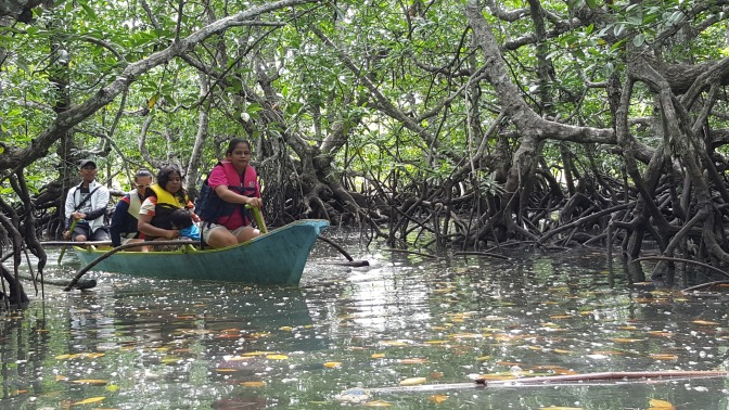 Mangrove and Its Benefits